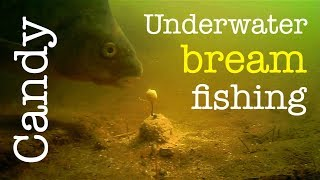 Bream fishing with Citrus Candy - Method feeder underwater - Breamtime S4 E1
