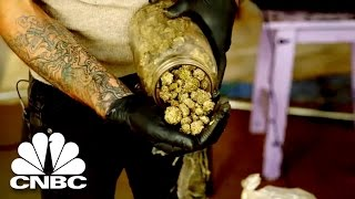 Black Market Marijuana: Big Business Of The Illegal Marijuana Industry | American Vice | CNBC Prime