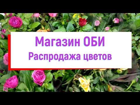 (63) Магазин ОБИ. Распродажа цветов.
