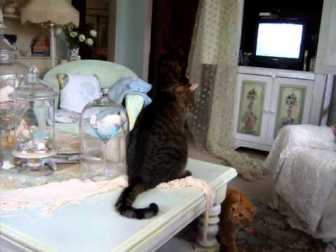 001.MOV Cats fighting and breaking glass vases on table