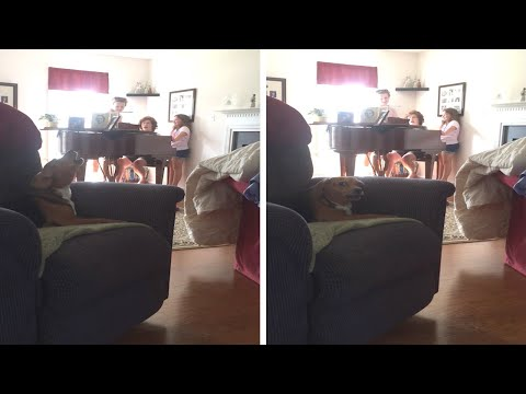 Dog Sings Along With Family Playing Piano