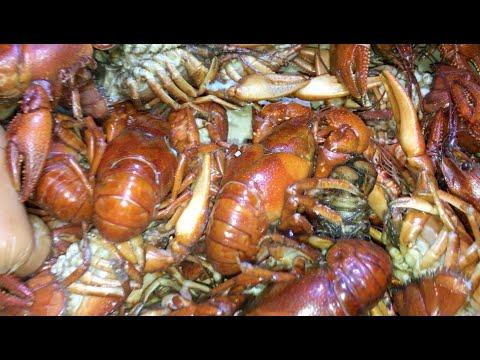 Utah Crawfish Boil!! (Catch, Clean, Cook)