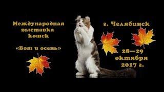 Выставка кошек в Челябинске 28.10.2017