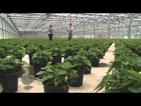 Metrolina Greenhouse Inside Jobs