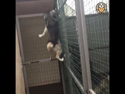 FUNNY DOGS AND CATS ESCAPE FROM THE SHELTER