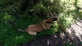 23.02 18.Природа и жизнь.Конь Зайчик-собака Ника и .... февральские цветы!-