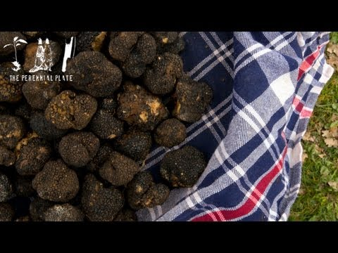 The Truffle Hunters   The Perennial Plate's Real Food World Tour