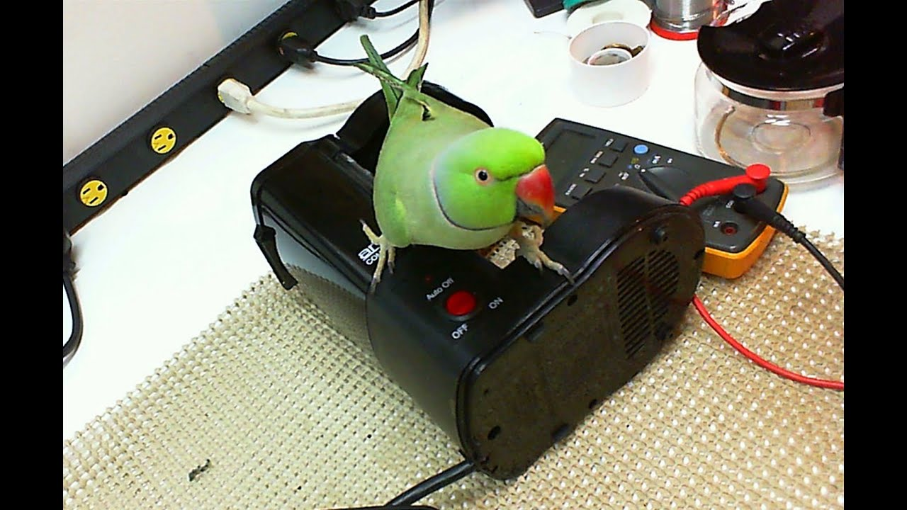 Bunn Coffee Maker Leak Repair Kit For Cw Wiring Diagram Fuse Schemes