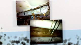 Mould Remediation in Toronto