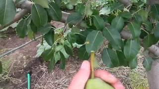 видео Продать квартиру на авито в батайске