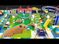 My Cute Hamster in Robot City Maze Obstacle Course - Funny Hamster Escape Robot Spider