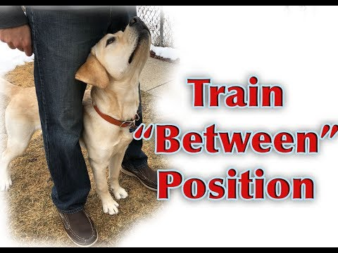 "Dog Training Tutorial: ""Between"" Position"