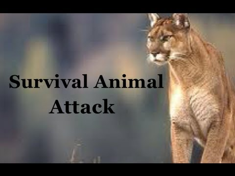 Survival Skills 101: How to Survive an Animal Attack while Hiking or Camping!