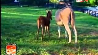 Zedonk, Hasil Kawin Zebra-Keledai