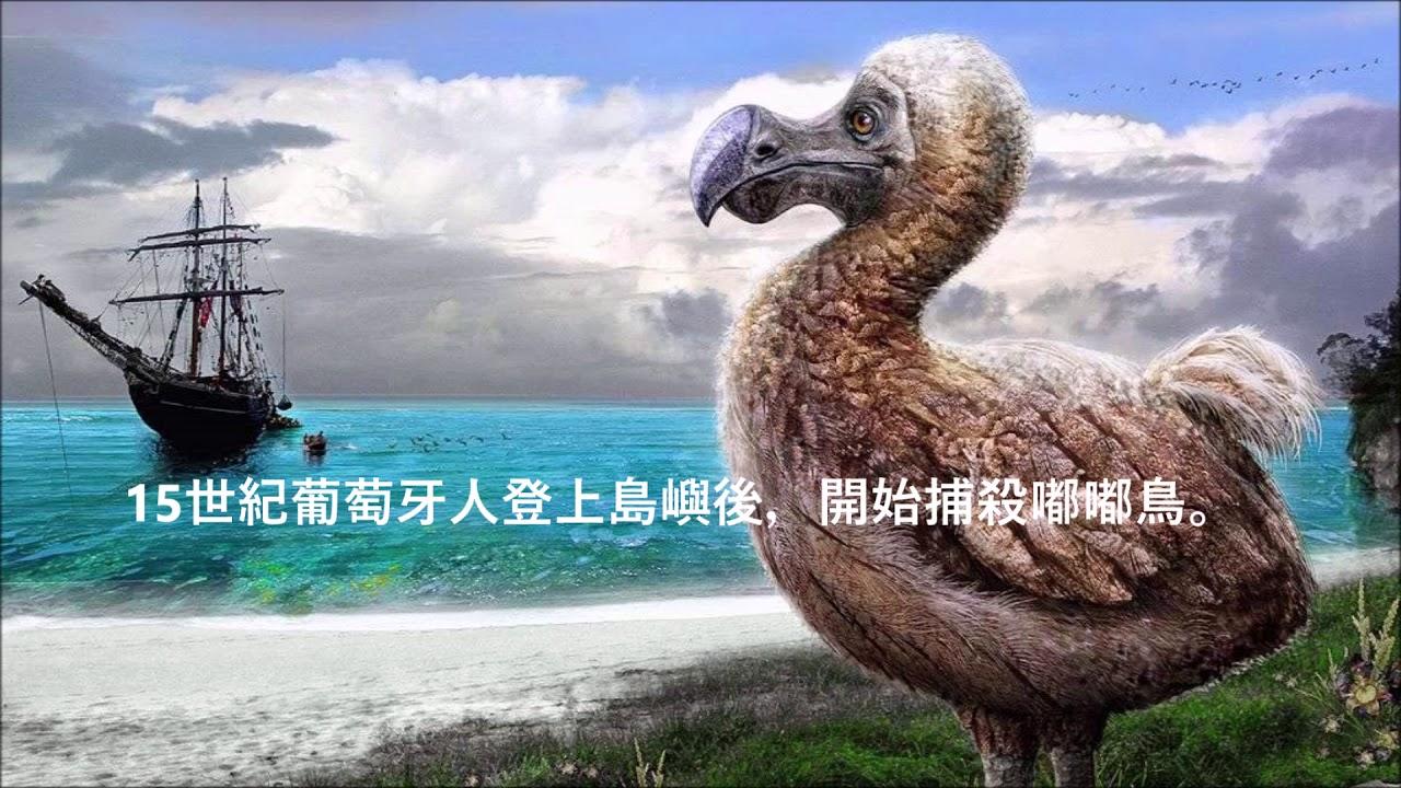 兩分鐘了解絕種動物 - 嘟嘟鳥/渡渡鳥/愚鳩 - YouTube