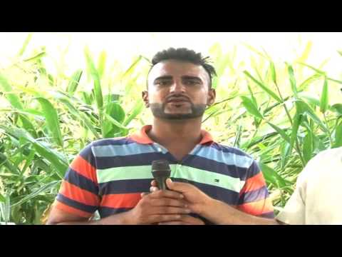 Kudrat Compost | Best results in crops production | Useful for farmers