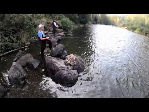 Green River Salmon Run 2019