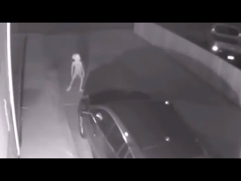 Mojo in the Morning - Dobby the House-Elf from Harry Potter Caught on Security Cam Video