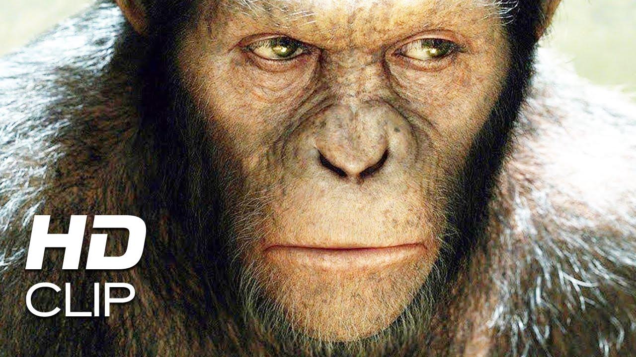 Apes Revolution Il Pianeta Delle Scimmie Le Scimmie Non