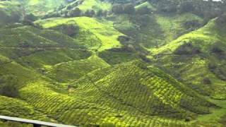 Boh tea plantations at Cameron Highlands