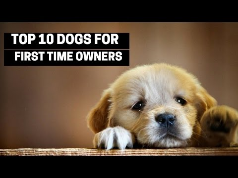 top-10-dogs-for-first-time-owners---best-puppy-breed-for-novices