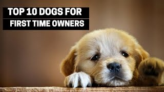 TOP 10 DOGS FOR FIRST TIME OWNERS  Best Puppy Breed For Novices