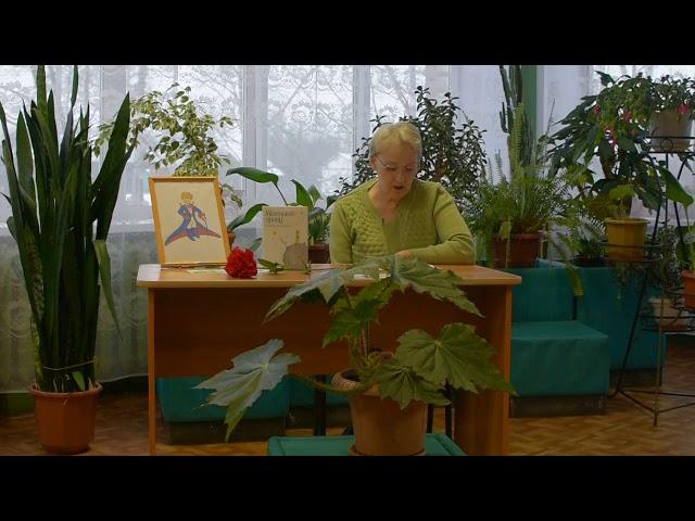 Изображение предпросмотра прочтения – ТатьянаТелятникова читает произведение «Маленький принц» Антуана деСента-Экзюпери