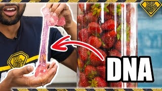 Extracting Pure DNA From 25 Pounds of Strawberries