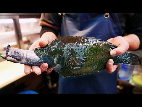 Japanese Street Food - SHOOTING MOUTH FISH Slingjaw Wrasse Japan Seafood