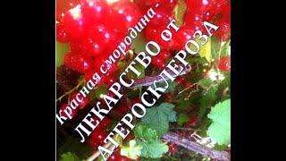 Сибирское здоровье - готовим желе из красной смородины