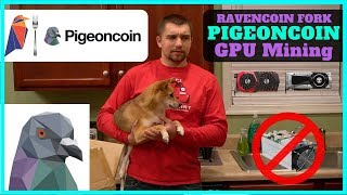 New Ravencoin Fork! What is Pigeoncoin? + How to Mine PGN + Suprnova Pool Setup