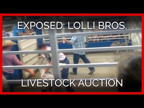 Inside the Lolli Bros. Alternative Livestock Auction