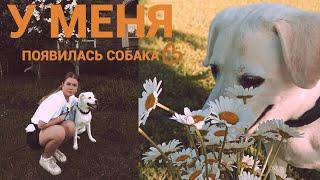 постер к видео у меня появилась собака!  влог