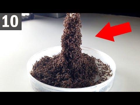 10 UNBELIEVABLE Ant Buildings