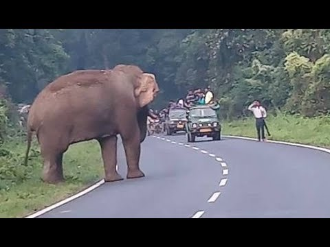 Elephant Attack in West Bengal