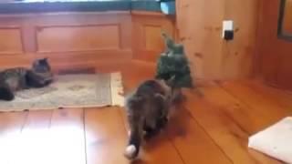Кот испугался Cat Funny Scared