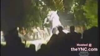 زفة على  حصان  ونهايتها مضحكة وخطرة في نفس الوقت