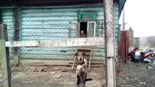 Приют для собак г Павлово...