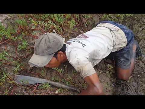 Mud Crab hunting adventure