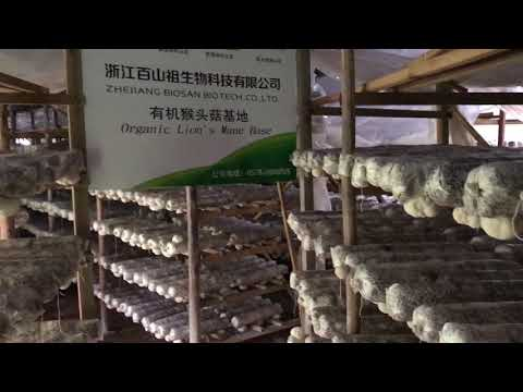 organic Hericium erinaceus farm from China