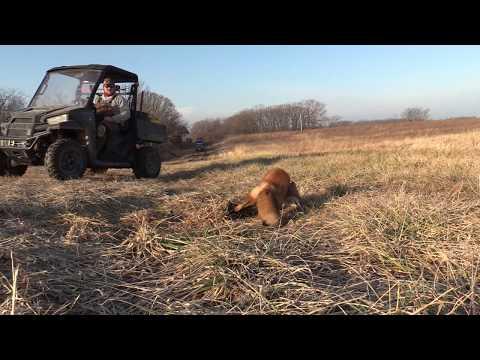 Fox Trapping In Missouri