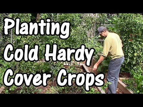 Building Soil Fertility with Fall & Winter Cover Crops/Green Manures