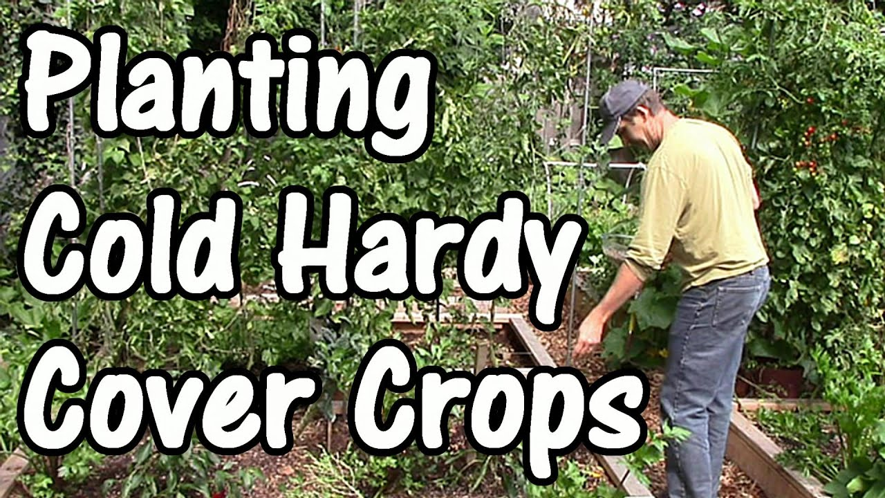 building soil fertility with fall u0026 winter cover crops green