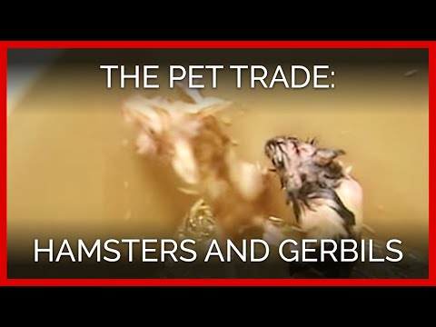 The Pet Trade: Hamsters And Gerbils