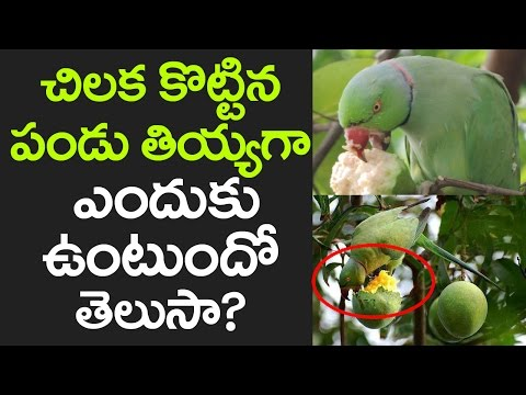 AMAZING FACTS About Parrots and Why They Eat Fruits! | Facts That You Never Know | VTube Telugu