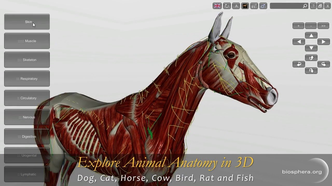Explore Animal Anatomy in 3D: Dog, Cat, Horse, Cow, Bird, Rat and ...