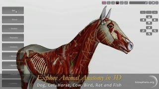 Explore Animal Anatomy in 3D: Dog, Cat, Horse, Cow, Bird, Rat and Fish
