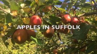 Gambar cover Apple Varieties UK