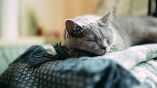 Витамины для кошек Unitabs