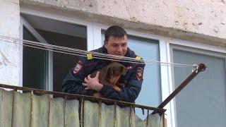 Собаку освободили из квартирного плена